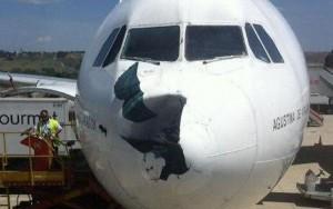 La presencia de fauna en los alrededores de los aeropuertos causa un buen número de incidentes y accidentes al cabo del año.