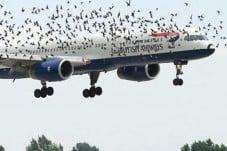 avion-aves
