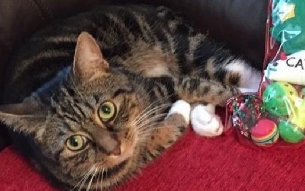 ¿Ha visto Vd. este gato?