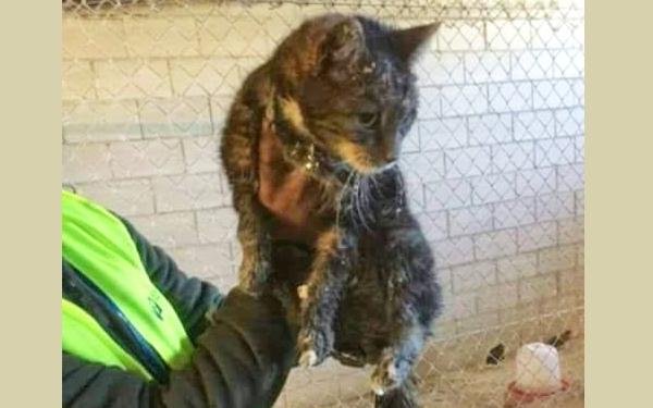 Itchi presentaba este deplorable aspecto en le momento de ser rescatado.
