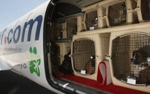 A menudo, los animales que deambulan por los aeropuertos se han fugado del transportín donde viajaban.