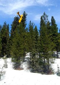 Aterrizaje en un árbol